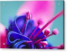 Fuchsia Detail Acrylic Print by Arkady Kunysz