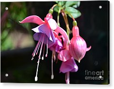 Acrylic Print featuring the photograph Fuchsia Flower by Scott Lyons