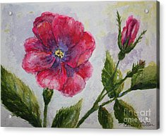 Fuchsia Rose And Bud Acrylic Print by Terri Maddin-Miller