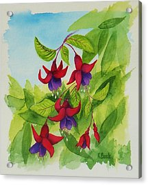 Fuchsias Acrylic Print by Katherine Young-Beck