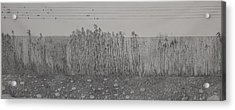 Fugue Acrylic Print by A  Robert Malcom