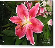 Acrylic Print featuring the photograph Fukuoka Lily by Carol Sweetwood