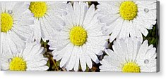 Full Bloom Acrylic Print by Jon Neidert