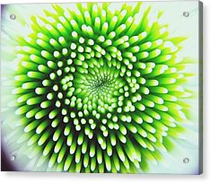 Full Frame Shot Of Beautiful Flower Acrylic Print by Alyssa Stasiukonis / Eyeem