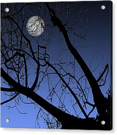 Full Moon And Black Winter Tree Acrylic Print by Ben and Raisa Gertsberg