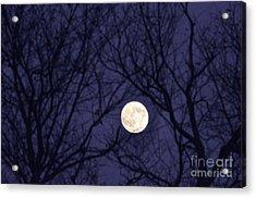 Full Moon Bare Branches Acrylic Print by Thomas R Fletcher