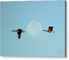 Full Moon Geese Acrylic Print