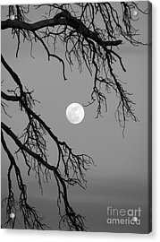 Full Moon Old Snag Acrylic Print
