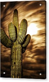Acrylic Print featuring the photograph Full Moon Saguaro by Anthony Citro