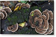 Fungi Contrast Acrylic Print