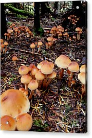 Fungi Forest Acrylic Print by Steven Valkenberg