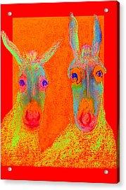 Funky Donkeys Art Prints Acrylic Print