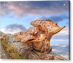 Funky Fungi Acrylic Print by Gill Billington