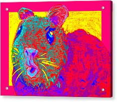 Funky Guinea Pig Acrylic Print
