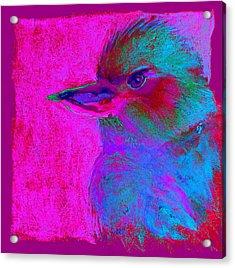 Funky Kookaburra Australian Bird Art Prints Acrylic Print