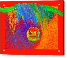 Funky Scottish Highland Cow Wildlife Art Prints Acrylic Print
