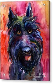 Funny Curious Scottish Terrier Dog Portrait Acrylic Print by Svetlana Novikova