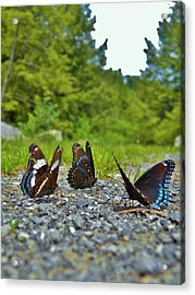 Funny Meeting You Here Acrylic Print