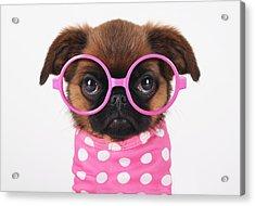 Funny Puppy Acrylic Print by Retales Botijero