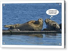 Funny Seals Acrylic Print