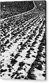 Furrows Acrylic Print by John Farnan