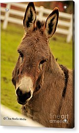 Acrylic Print featuring the photograph Furry And Friendly On A Farm by Tonia Noelle