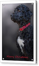 Furry Christmas Acrylic Print by Cindy Rubin