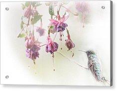 Fuschia Dreams Acrylic Print