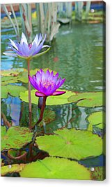 Fushia Lily  Acrylic Print