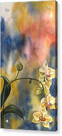 Fusion Orchid Acrylic Print
