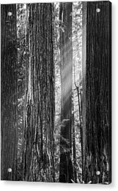 Future Giants Monochrome Acrylic Print by Mark Alder