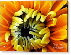 Acrylic Print featuring the photograph Fuzzy Wuzzy by Judy Wolinsky