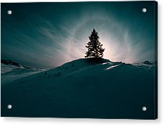 Fv4157, Will Datene Pine Tree On A Hill Acrylic Print by Will Datene