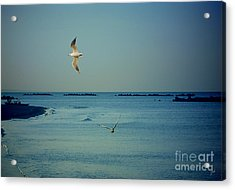 Acrylic Print featuring the photograph Gabbiani - Seagulls by Ze  Di