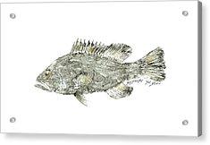 Gag Grouper Acrylic Print by Nancy Gorr
