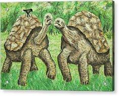 Galapagos Giant Tortoise Acrylic Print by Ronald Haber