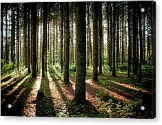 Galarneau Acrylic Print