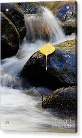 Acrylic Print featuring the photograph Galena Creek Trail  by Vinnie Oakes