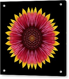 Acrylic Print featuring the photograph Galliardia Arizona Sun Flower Mandala by David J Bookbinder