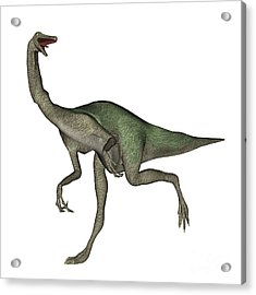 Gallimimus Dinosaur Acrylic Print by Elena Duvernay