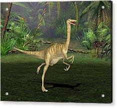 Gallimimus Dinosaur Acrylic Print