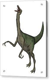 Gallimimus Dinosaur Roaring Acrylic Print by Elena Duvernay