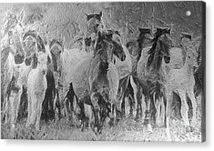 Galloping Horse Team Acrylic Print by Odon Czintos