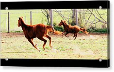 Galloping Horses Acrylic Print by Arie Arik Chen