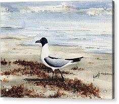 Galveston Gull Acrylic Print