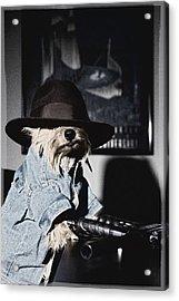 Gangster Dog Acrylic Print by Susan Stone