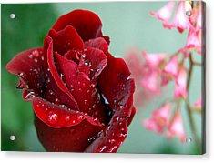Garden Bouquet Acrylic Print by Steven Milner