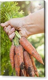 Garden Carrots Acrylic Print