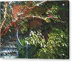 Garden Climb  Acrylic Print