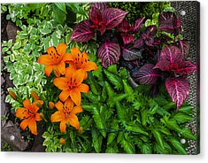 Acrylic Print featuring the photograph Garden Colors by Phil Abrams